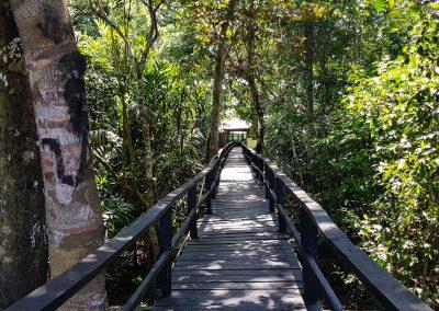 Amazon-Reserve-Zacambu-Rainforest-Lodge-4