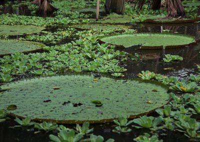 Amazon-Tupana-Aru-U-Nature-Reserve-12