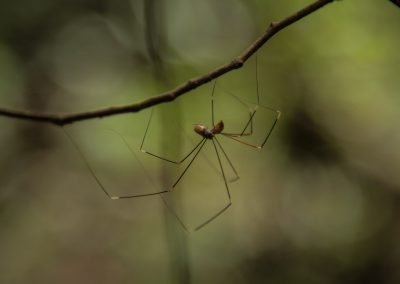 beautiful-spider-in-the-amazon