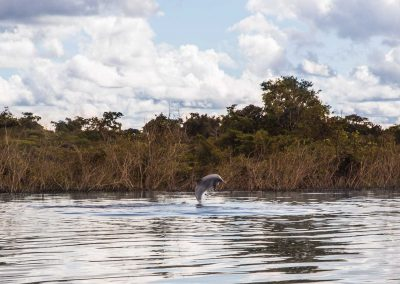 dolphin-in-the-amazon-river