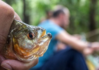great-piranha-in-the-amazon