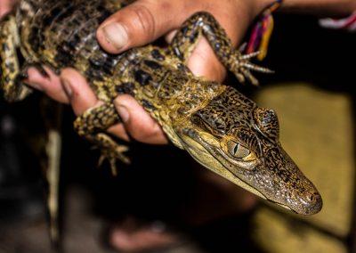 lizard-in-tourist-hands