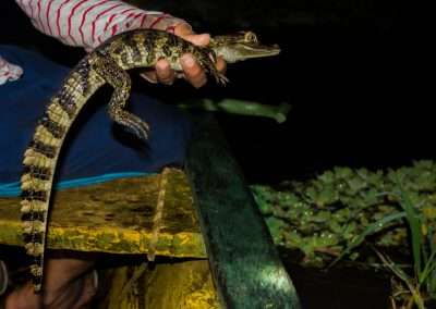 small-caiman-in-indigenous-hands