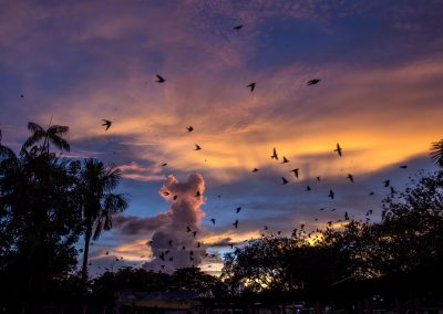 sunset-full-of-Amazonian-birds